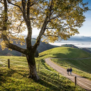 Wald Alp Aussicht Scheidegg
