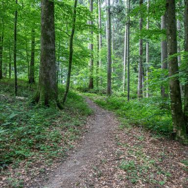 Wald von Wald