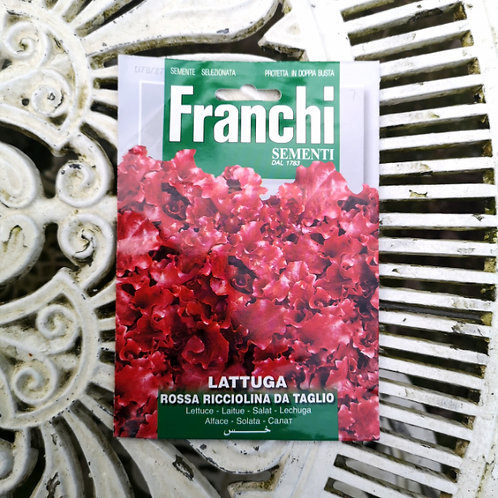 Purple Lettuce from Franchi Seeds