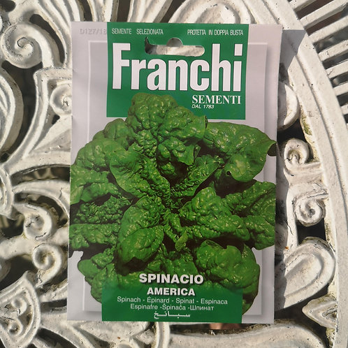 Spinach from Franchi Seeds (1 pack allowance)
