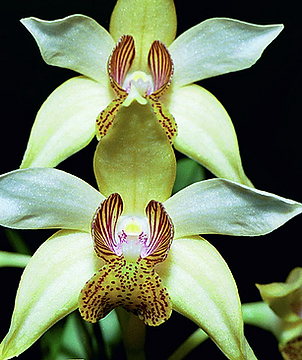 flora and fauna.PNG