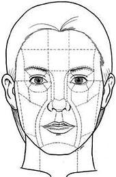 Facial subunits.jpg