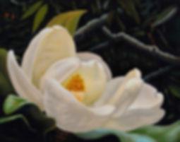 Magnolia_JayDavis_print_13x19_$65.jpg