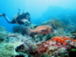 plongée à bali Amed Tulamben voyage bali