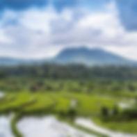riziere terrasse jatiluwih Bali