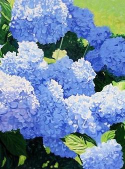 Blue Hydrangeas I