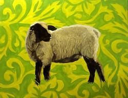 Black-Faced Sheep, Lemon/Lime Bkgrd