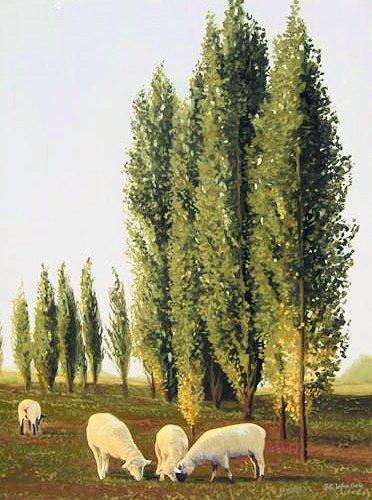 Tusan Sheep