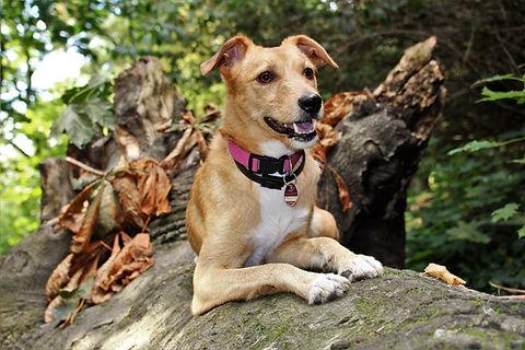 Paw Paw's Pet Services Dog Hike Missouri