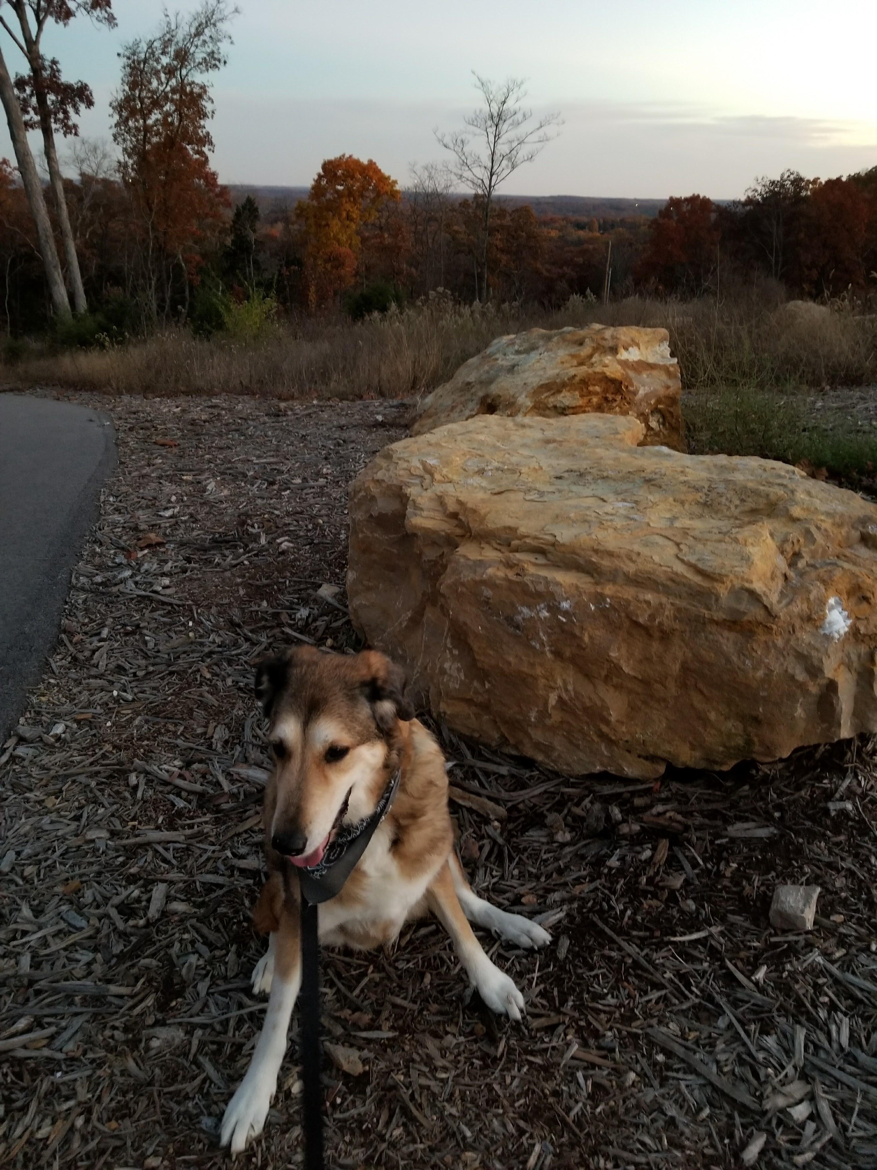 Dog Hiking Journey