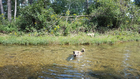Professional Pet Sitter Paw Paw's Pet Services Dog Swimming