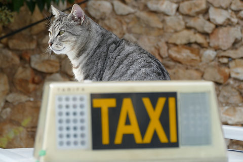 Pet Taxi Dittmer, MO Paw Paw's