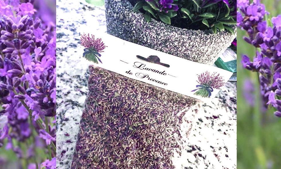 Lavender Flowers - Fleurs de Lavande