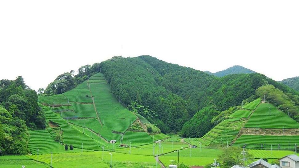 森内茶農園.jpg