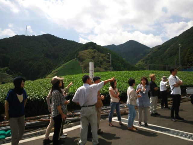 Tea Farm  in Moriuchi