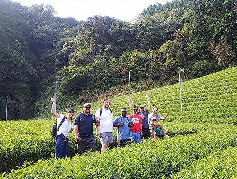 日本茶ツアー少人数用プログラム