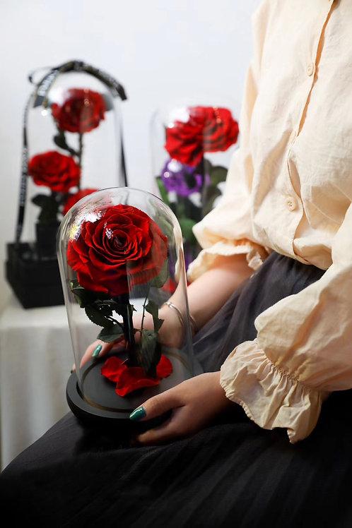 Preserved Rose - Single Regular