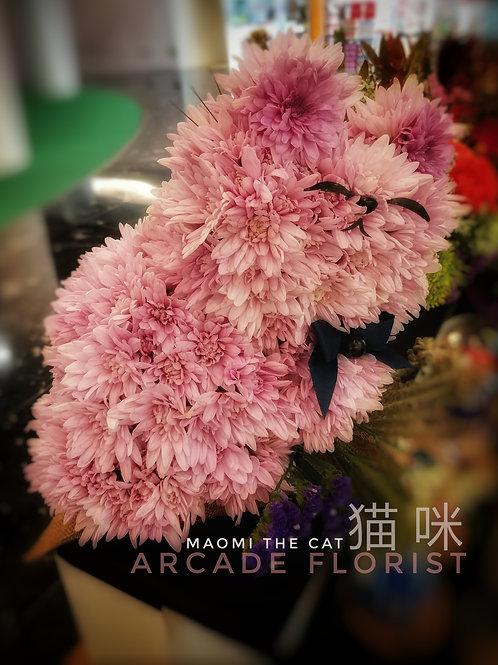 Maomi The Cat