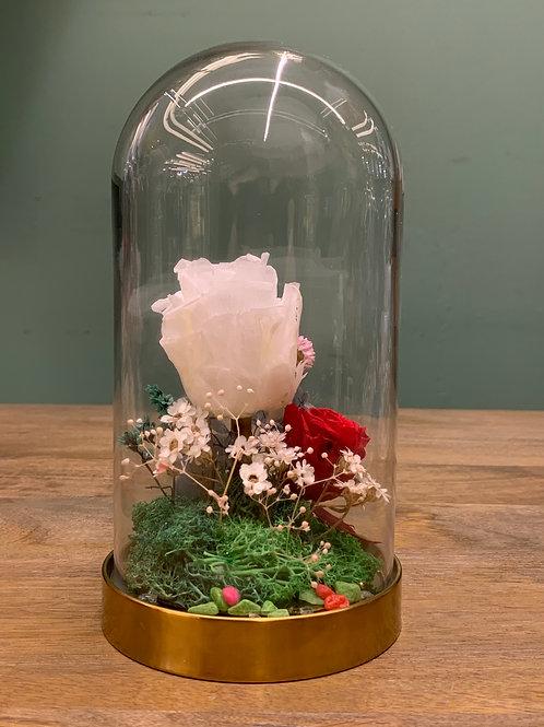 Enchanted Forever Rose