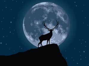 行星之夜,和赛德华夏一起赏雄鹿满月