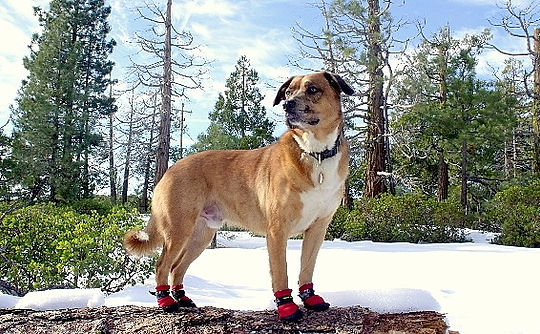 dog snow booties