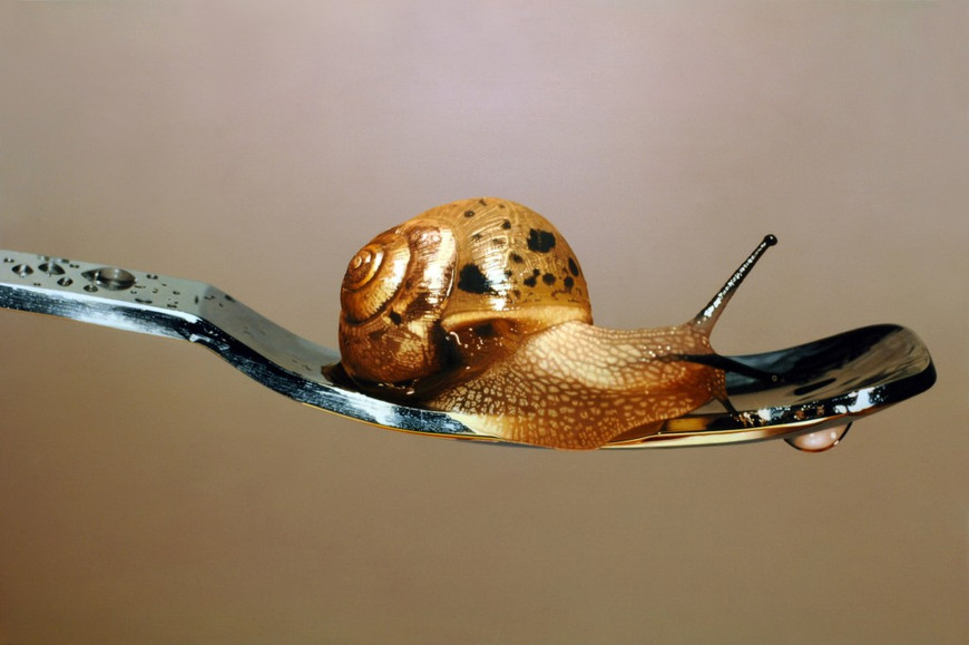 Nothing Life Object snail