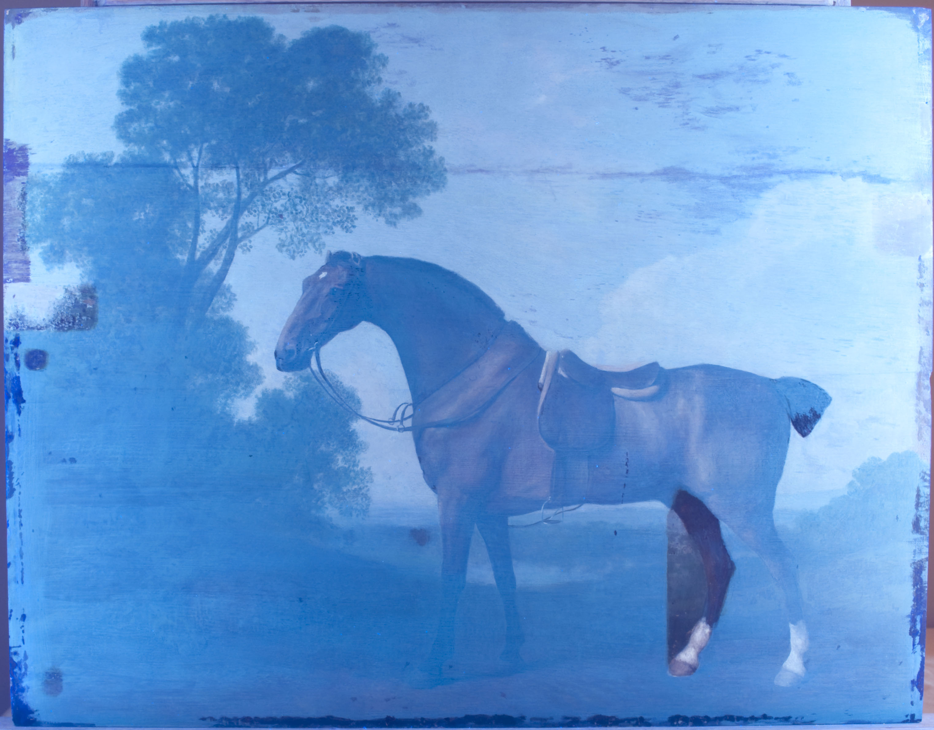 uv-horse