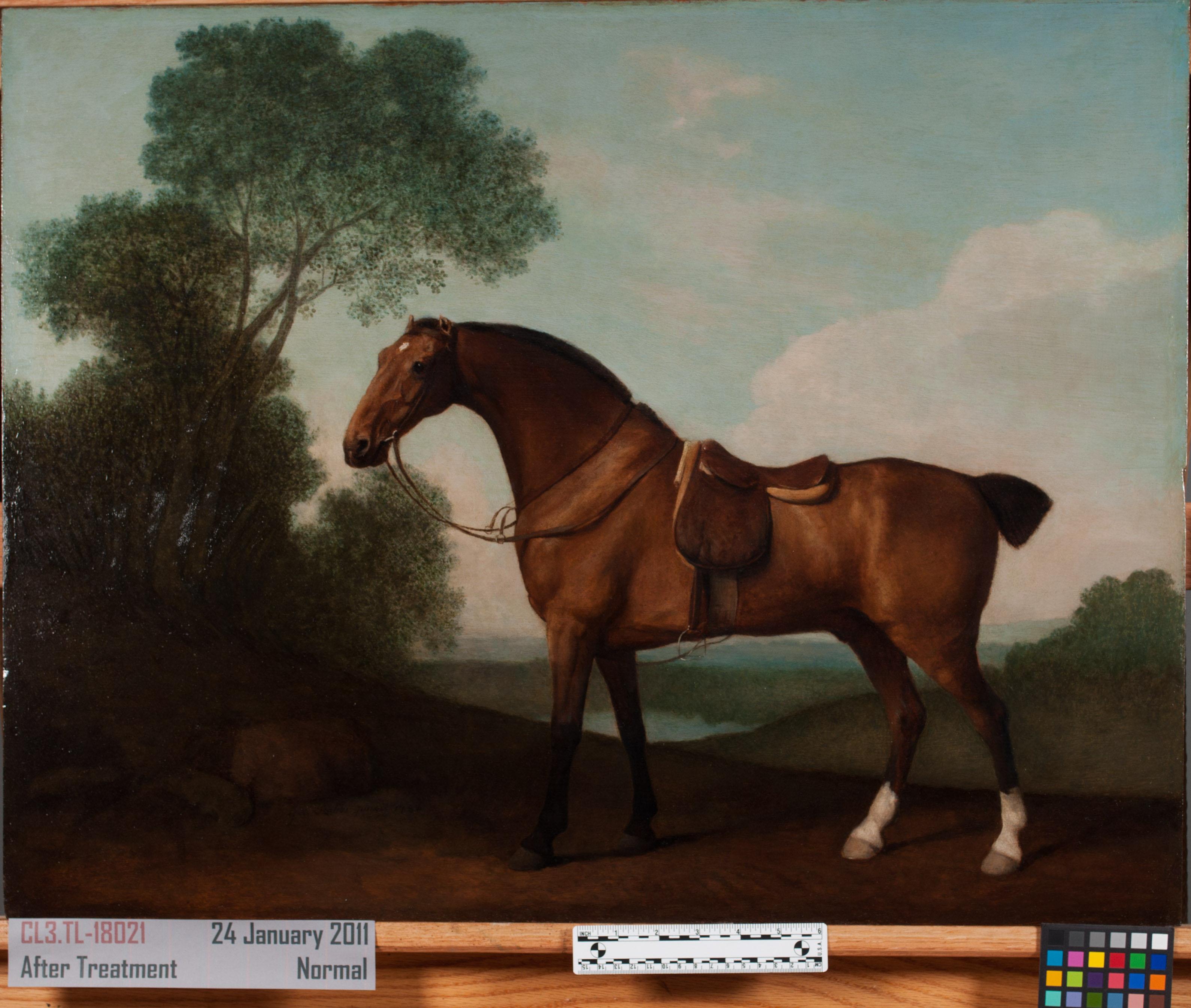 clean-horse