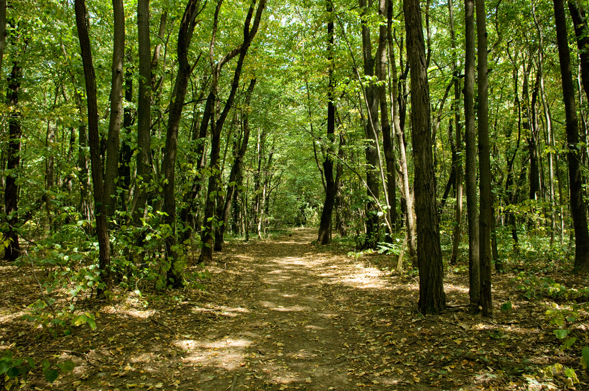 Loven Park