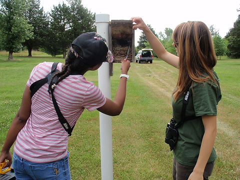 DNERR Interns Checking Nest Boxes.JPG