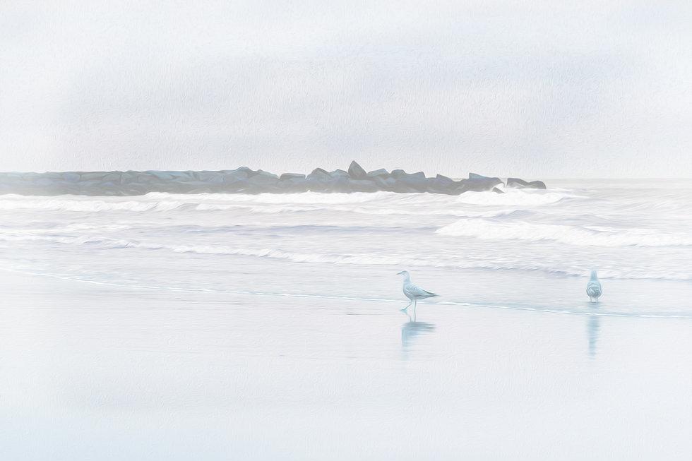 _MG_4417-Edit no logo_Gulls On Beach.jpg