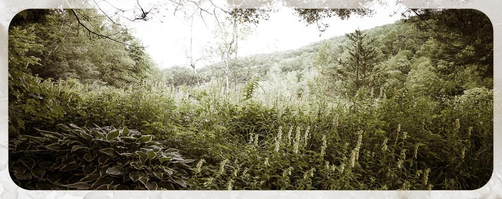 Christina Siu Photography website 1440-1