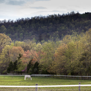 A landscape scene of a white horse eating in a corral with fall tinged trees and a mountain in the background.