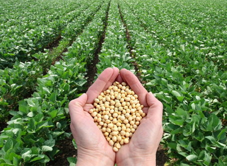 Why Soy is Bad for You and the Planet