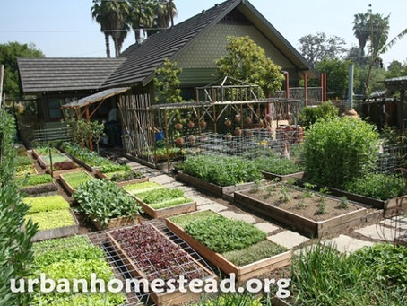 Growing your own food on 1/10th Acre