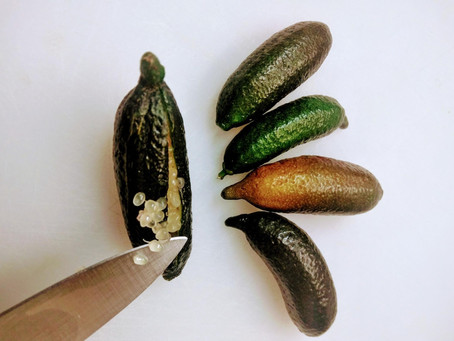 How to Use the Lime Caviar (from the Finger Lime)