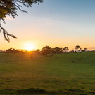 Property backing horse paddocks