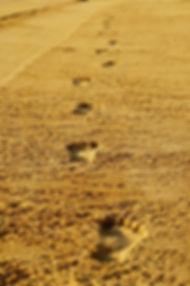 footprints-2502408_960_720_edited.jpg