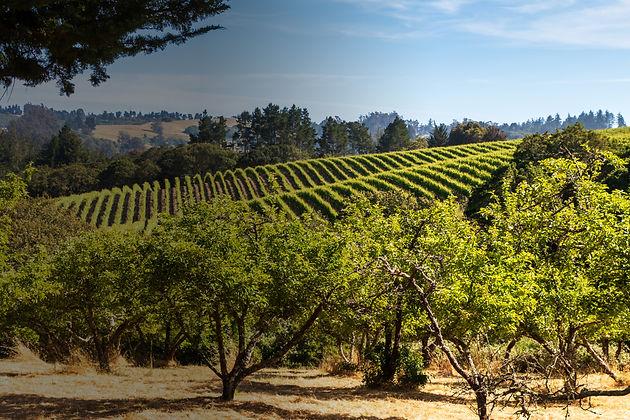 vineyarddark.jpg