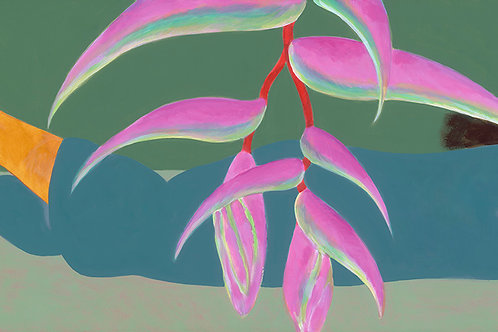 Pink Heliconia