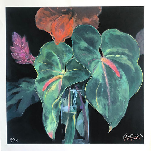 Limited Edition Anthuriums