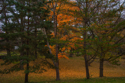 Fall-Goodbye_9386