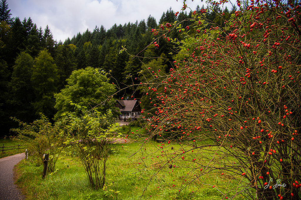Country-Cottage_0408