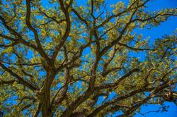 Cottonwood-Matrix_3636