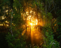 Glowing-Sundown_8336