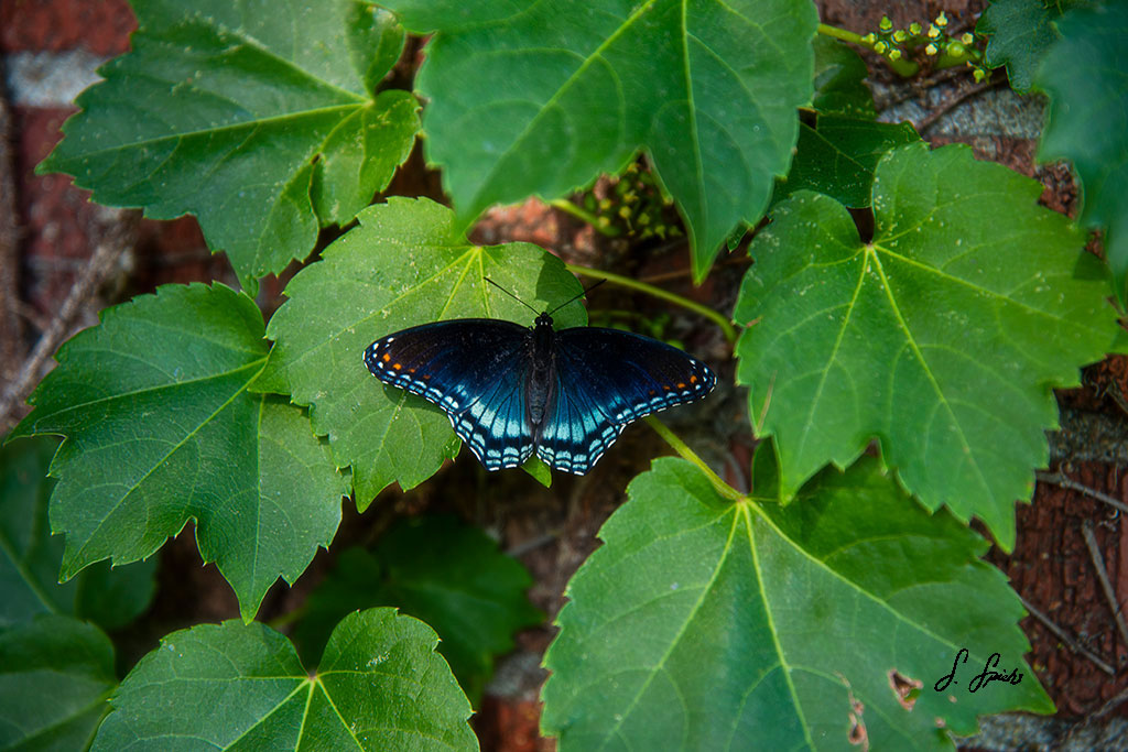 Nature's-Gift_0517