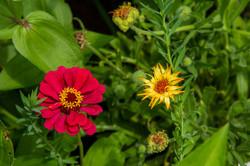 Flower-Pair_4444