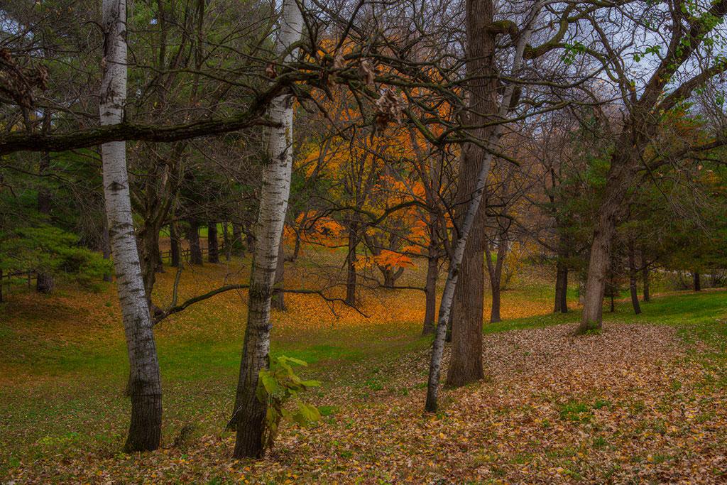 Fall-In-Between_9265