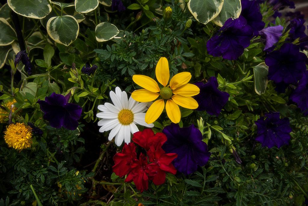 Four-Friends-Bloom_4531