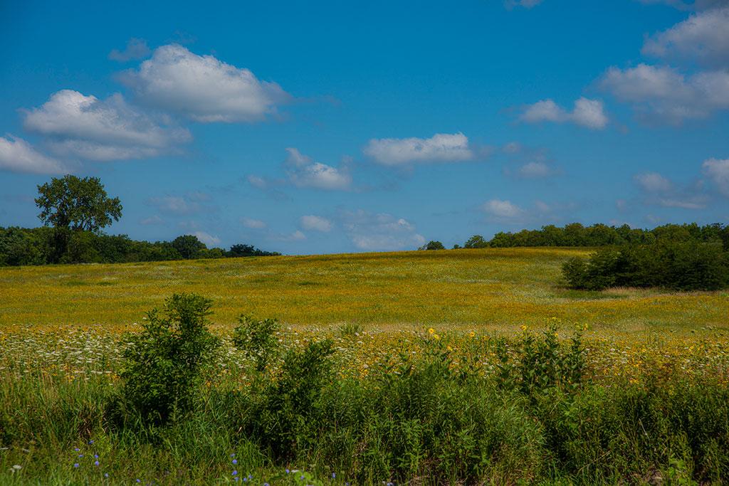 Yellow-Flower-Valley_2913